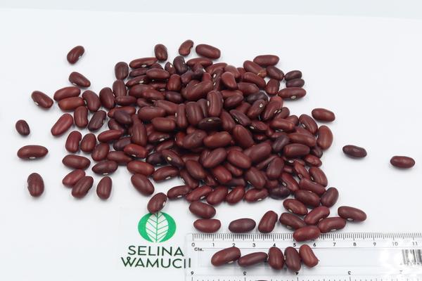 Mozambique Kidney Beans