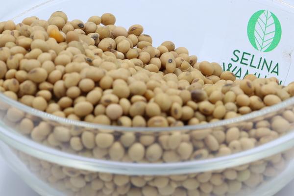 Nigeria Soyabeans